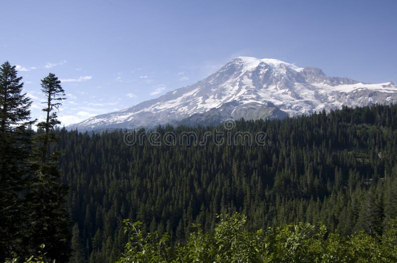Maximal skog Mount Rainier för snö fotografering för bildbyråer