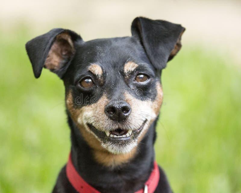 Maximum avec un sourire photos stock