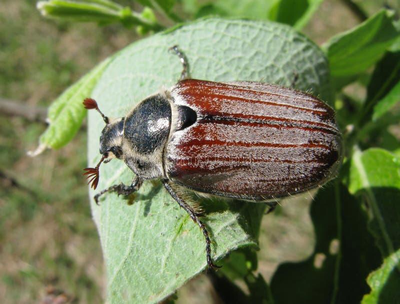 The May Beetles PDF Free download
