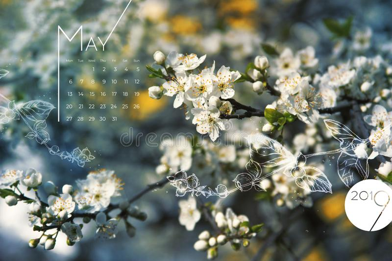2019 May calendar spring flowers blossom. Beautiful white cherry bloom screen, desktop month 05, 2019. Colorful 2019 calendar royalty free stock photography