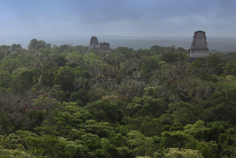 maya джунглей Гватемалы зданий tikal стоковая фотография