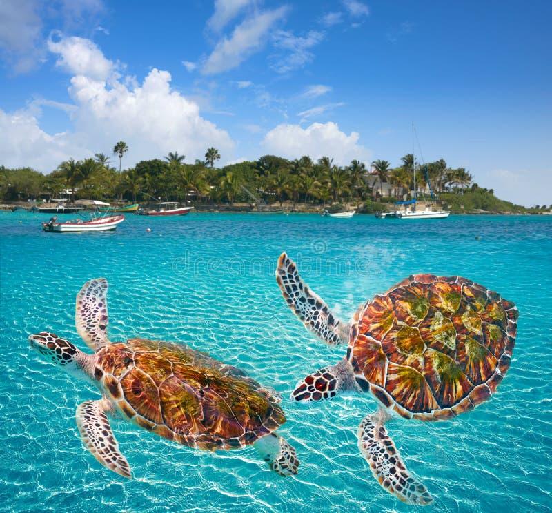 Maya de Riviera del photomount de las tortugas de la playa de Akumal imagen de archivo libre de regalías