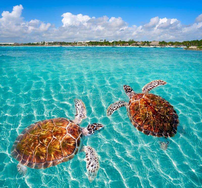 Maya de Riviera del photomount de las tortugas de la playa de Akumal fotografía de archivo libre de regalías