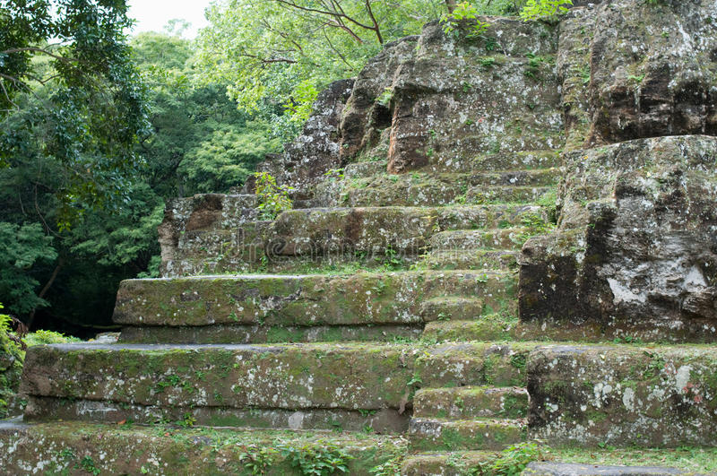Maya Temple In Tropical Forest royalty free stock photo