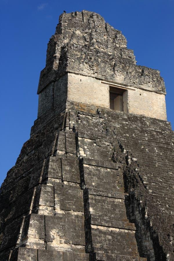Mayan καταστροφές ναών, Tikal εθνικό πάρκο, Γουατεμάλα στοκ εικόνες με δικαίωμα ελεύθερης χρήσης
