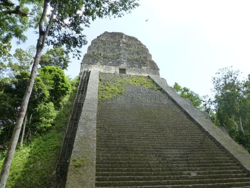 Mayan piramide in Tikal stock foto