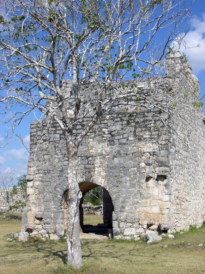 Mayan Ruins Tree royalty free stock images