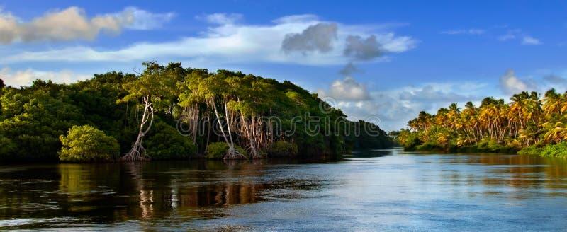 mayaro Τομπάγκο Τρινιδάδ στοκ φωτογραφίες με δικαίωμα ελεύθερης χρήσης