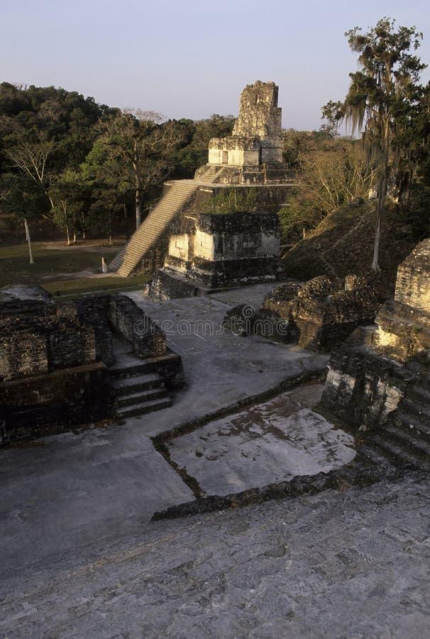 Mayaruinen Tikal, Guatemala stockfotos
