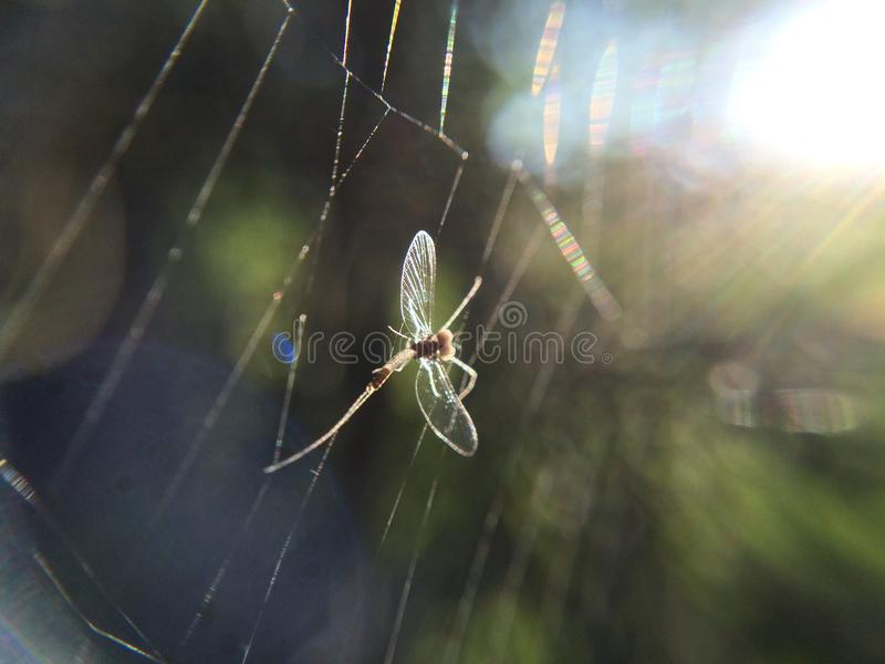 Mayflies insect cobweb spiderweb nature stock images
