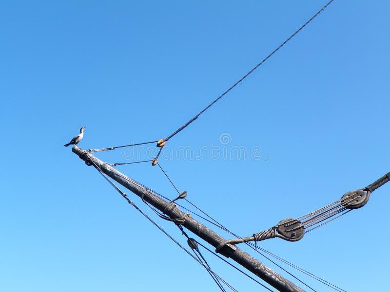 Mayflower 2 hampariggning med kormoran i Plymouth royaltyfria bilder
