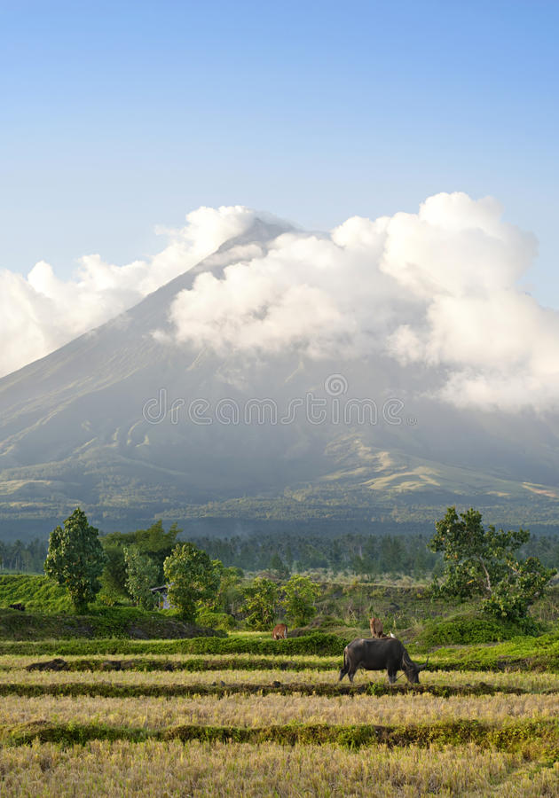 Download Mayon Volcano stock photo. Image of landmark, buffalo - 26491804