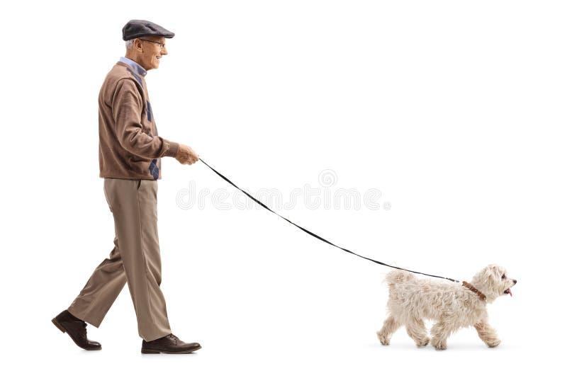 Mayor caminando un perro imagen de archivo
