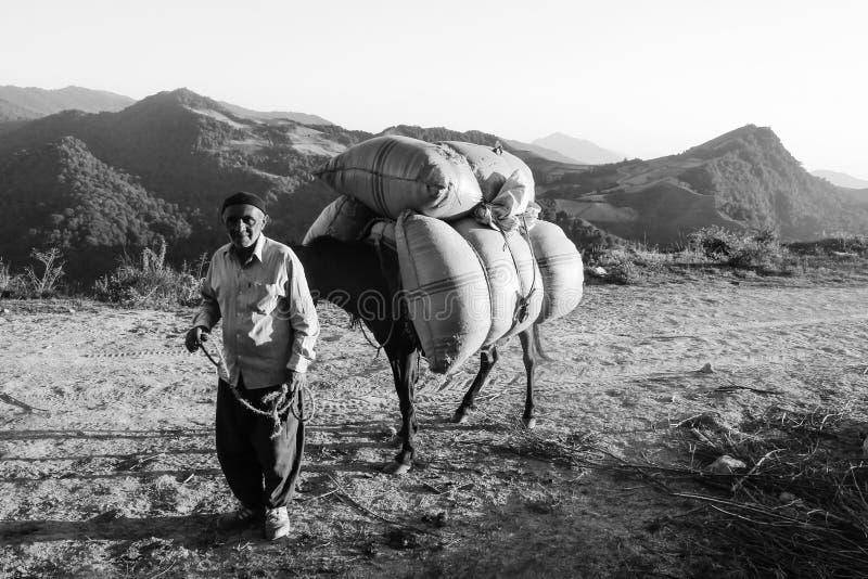 Mazandaran, Iran - 19 luglio 2017: Persona anziana iraniana con il suo asino che porta le borse pesanti nella montagna a nord del fotografia stock
