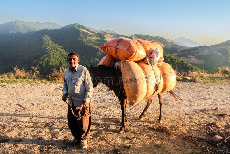 Mazandaran, Iran - 19 luglio 2017: Persona anziana iraniana con il suo asino che porta le borse pesanti nella montagna a nord del fotografia stock libera da diritti