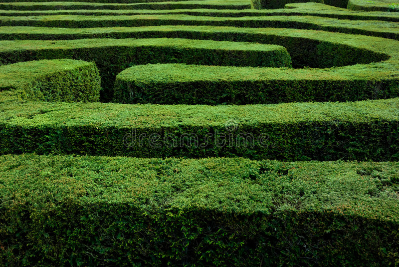 Download Maze stock photo. Image of foliage, curve, labyrinth, choice - 9031802