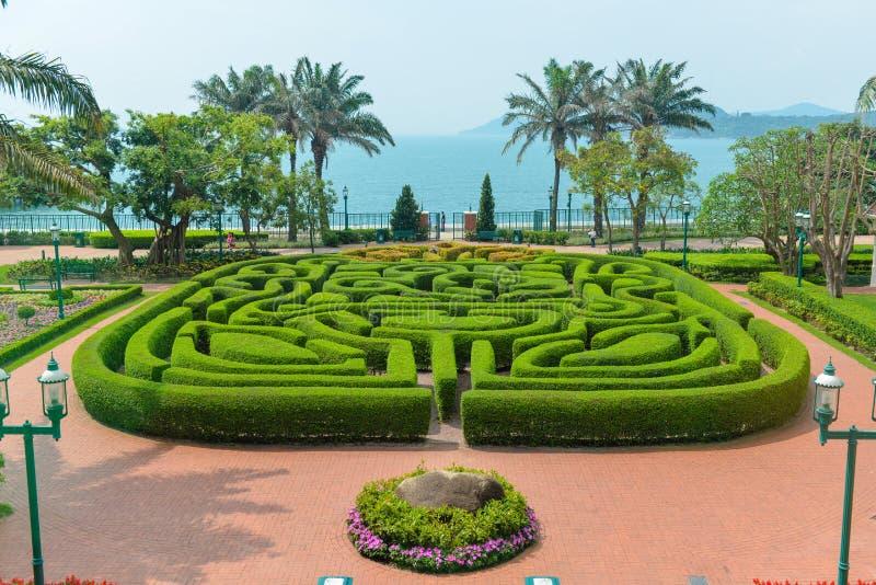 Maze. It is a beautiful maze made of bush stock image