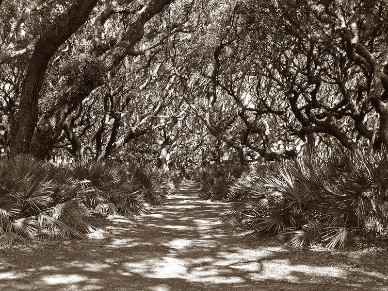 Maze of Branches royalty free stock photo