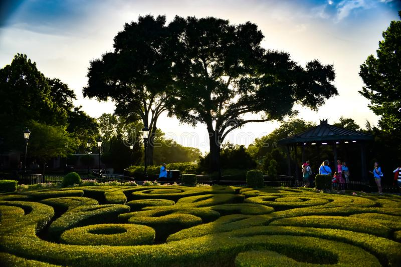 Maze of hedges. Maze of low hedges at golden hour stock photos