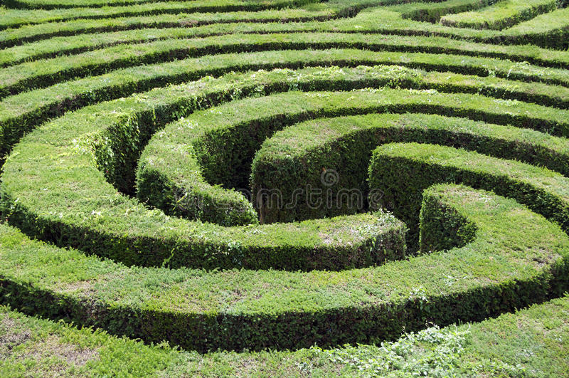 Maze made from a hedge stock photos