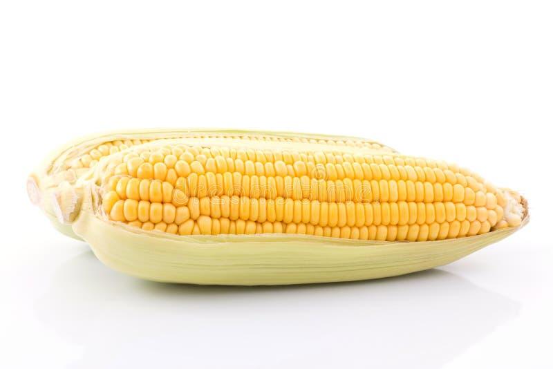 mazorca de maíz aislada en el fondo blanco con Con las hojas verdes fotos de archivo