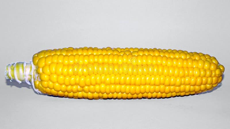 Mazorca de maíz amarilla y fondo blanco foto de archivo libre de regalías