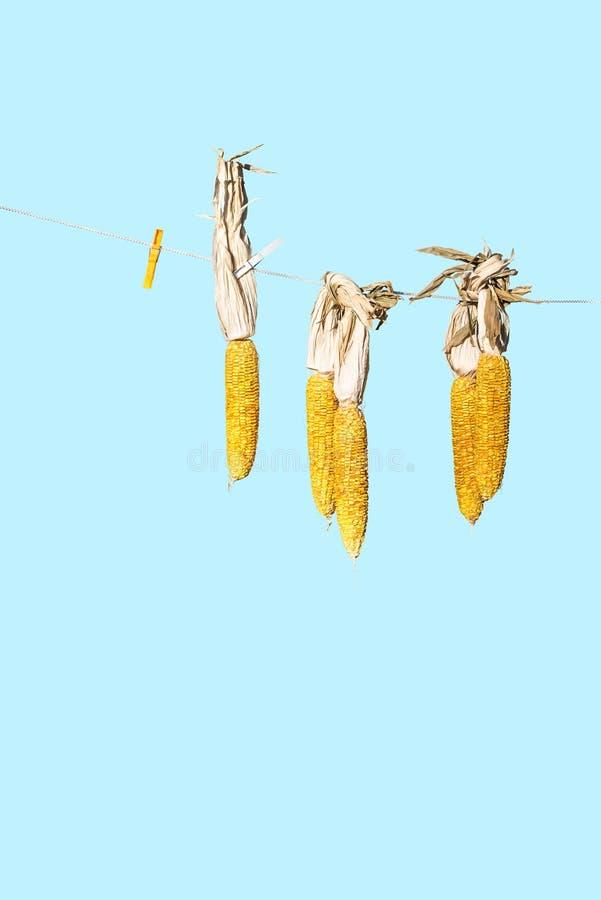 Mazorca de maíz de la ejecución imágenes de archivo libres de regalías