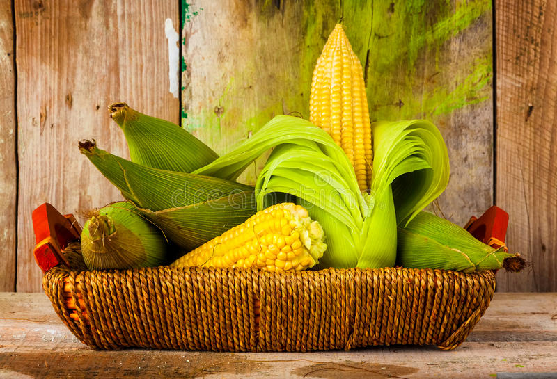Mazorcas de maíz en cesta con un fondo de madera rústico fotografía de archivo libre de regalías