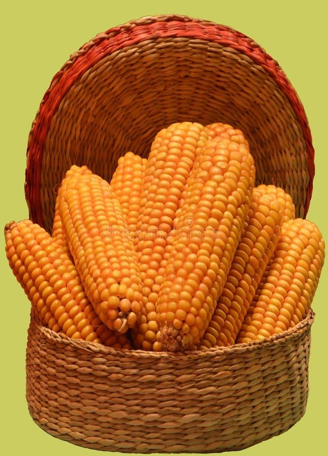 Mazorcas de maíz llenadas en pequeña cesta del wicer fotos de archivo libres de regalías