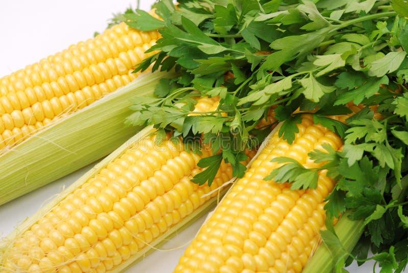 Mazorcas y perejil amarillos de maíz imagen de archivo libre de regalías