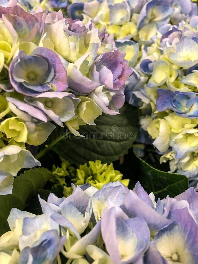 Mazzi colorati pastelli del fiore fotografia stock libera da diritti