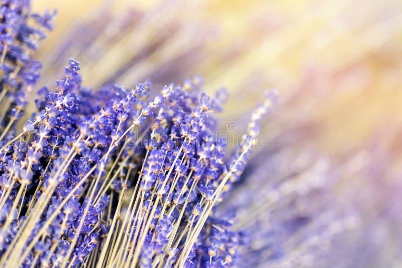 Mazzi di ramoscelli secchi del fiore della lavanda Mucchio dell'erba del lavandula Decorazione a servizio del fiorista Negozio di immagine stock libera da diritti