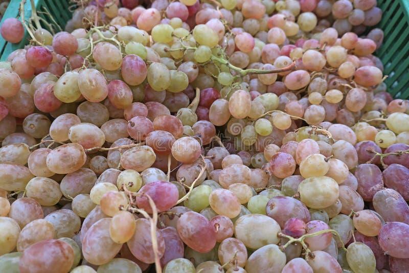Mazzi di uva matura immagini stock libere da diritti
