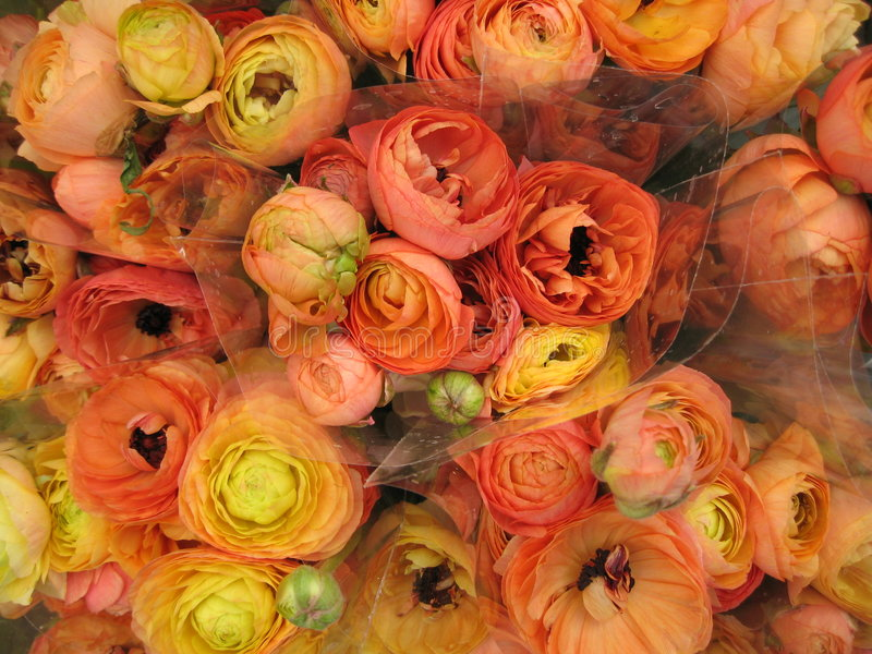 Mazzo arancione del fiore immagini stock