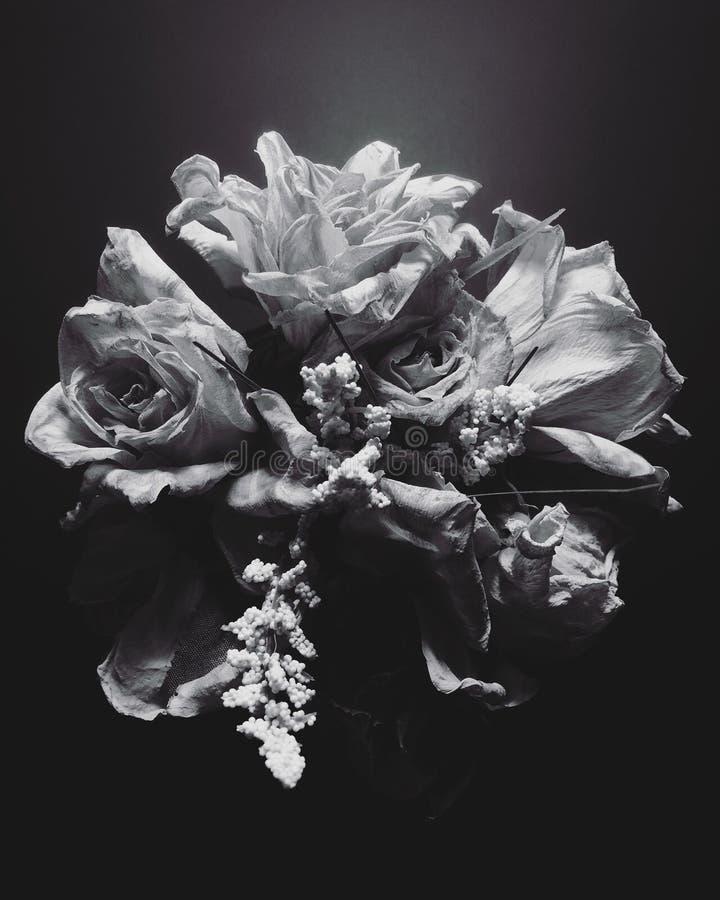 Mazzo in bianco e nero della rosa fotografie stock