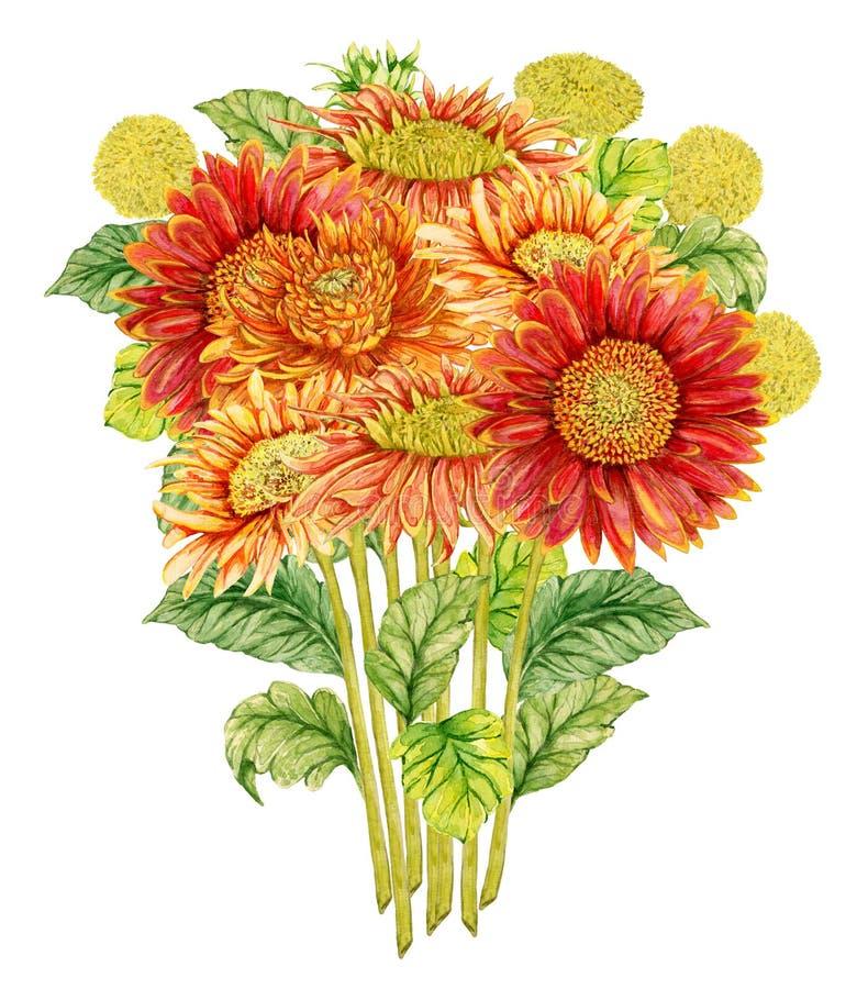 Mazzo con il fiore della gerbera dell'acquerello illustrazione di stock