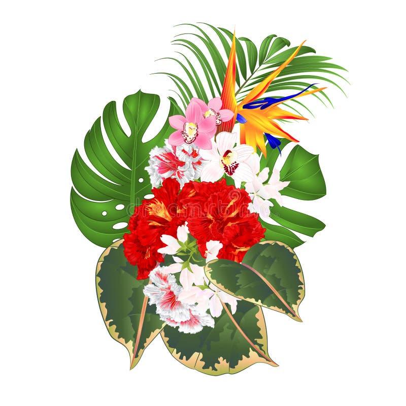 Mazzo con la disposizione floreale dei fiori tropicali con bella strelizia e l'amico bianco e rosso del Cymbidium delle orchidee  illustrazione di stock