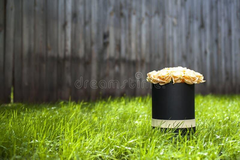 Mazzo cremoso delle rose in contenitore di regalo nero sui precedenti di erba verde immagine stock libera da diritti