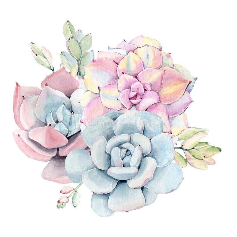 Mazzo d'annata dei succulenti dell'acquerello royalty illustrazione gratis