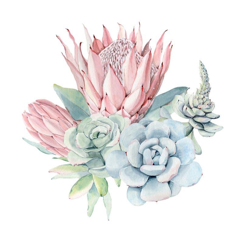 Mazzo d'annata dei succulenti dell'acquerello illustrazione vettoriale