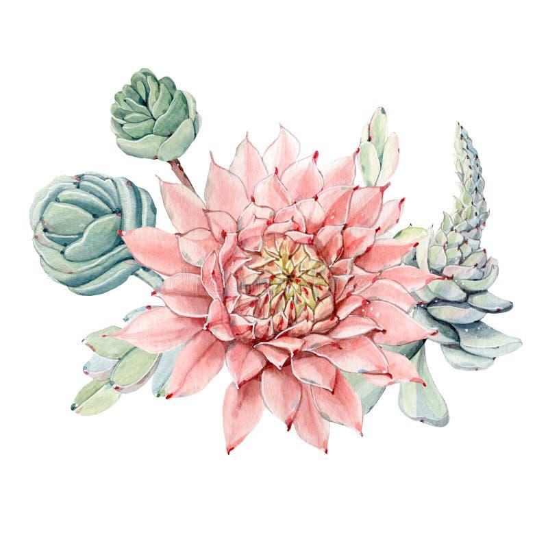 Mazzo d'annata dei succulenti dell'acquerello illustrazione di stock