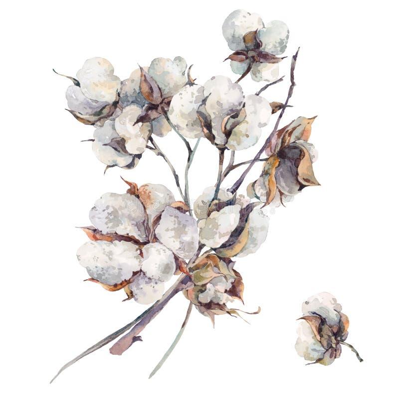 Mazzo d'annata dell'acquerello dei fiori del cotone royalty illustrazione gratis