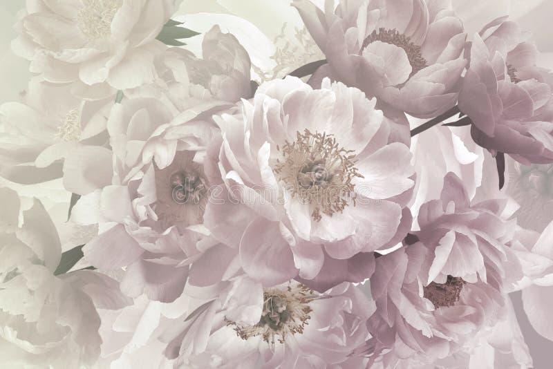 Mazzo d'annata di belle peonie dei fiori del giardino Albero congelato solo fotografia stock