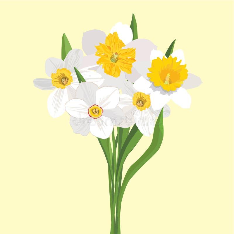 Mazzo dei daffodils dei fiori royalty illustrazione gratis