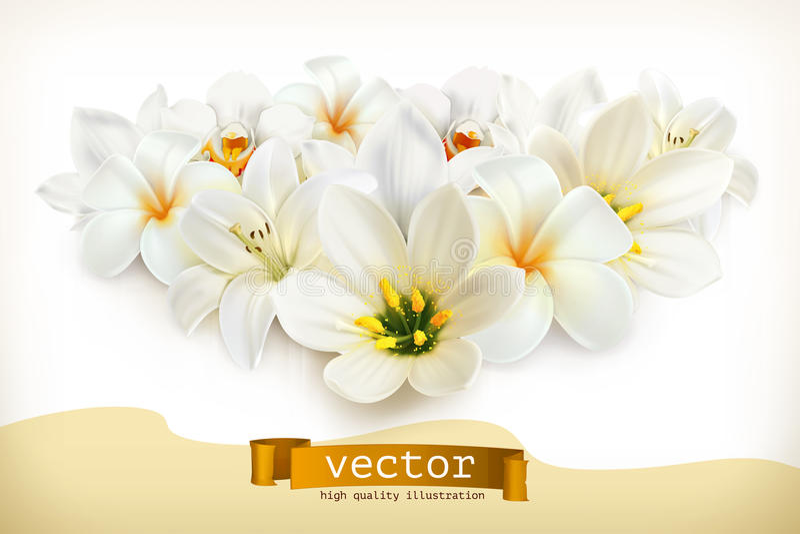 Mazzo dei fiori bianchi royalty illustrazione gratis