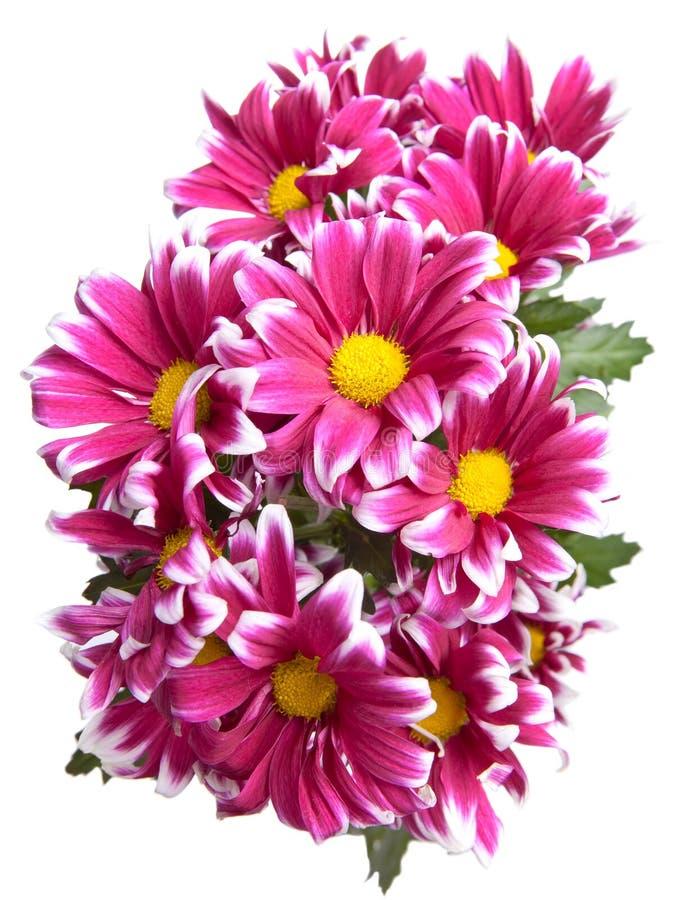Mazzo dei fiori decorativi su una parte posteriore di bianco immagine stock