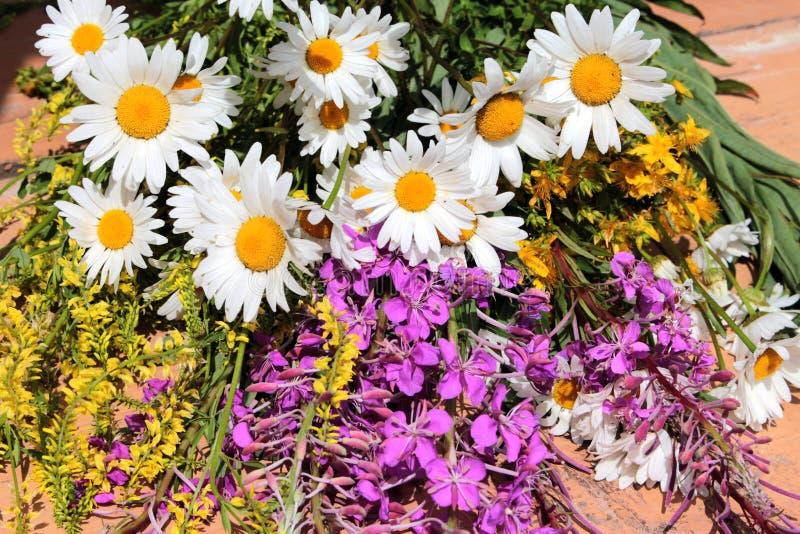 Mazzo dei fiori del campo contro il cielo fotografia stock libera da diritti