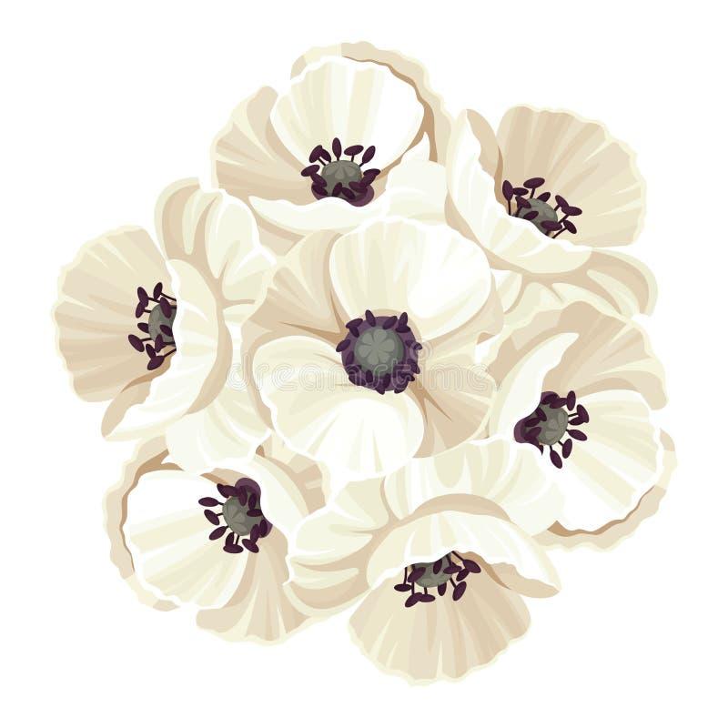 Mazzo dei fiori del papavero coltivato Illustrazione di vettore illustrazione vettoriale