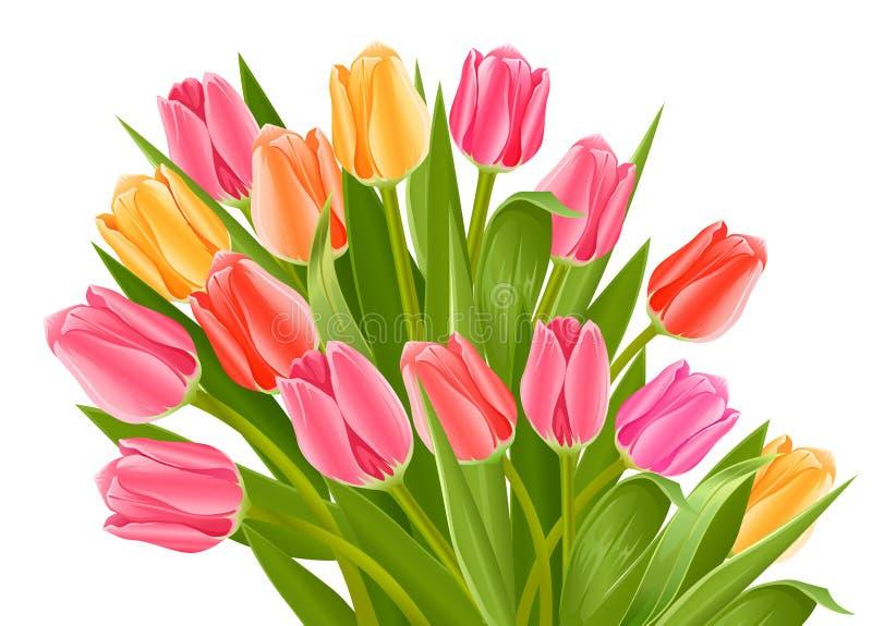 Mazzo dei fiori del tulipano illustrazione vettoriale