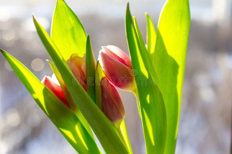 Mazzo dei fiori della sorgente fotografia stock libera da diritti